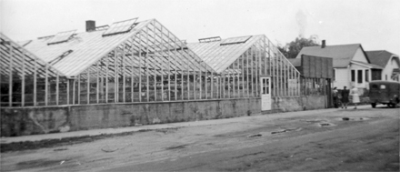 Hillview_greenhouse.jpg